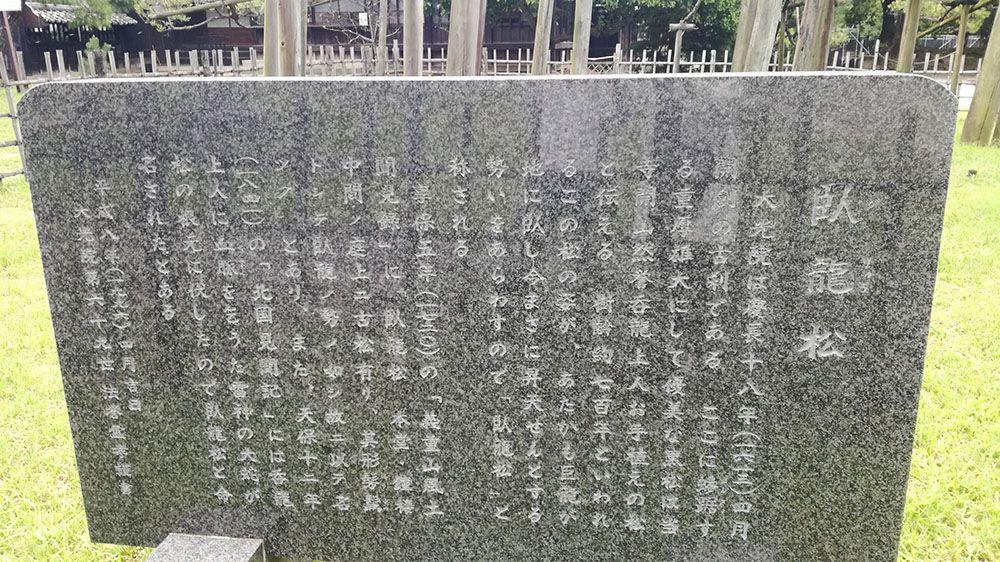 大光院の臥龍松の看板
