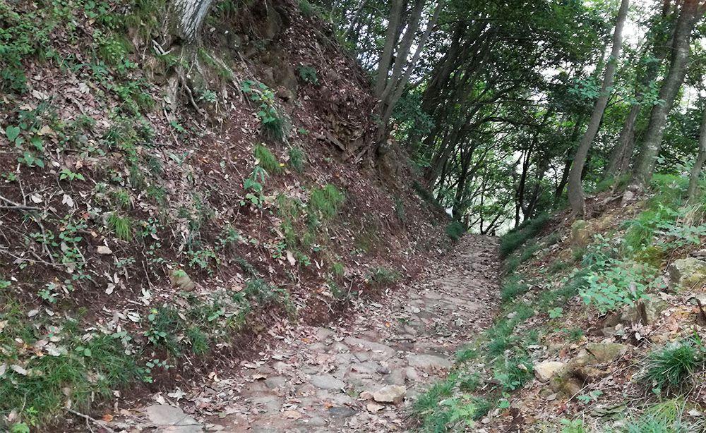 金山城跡の西矢倉台西堀切