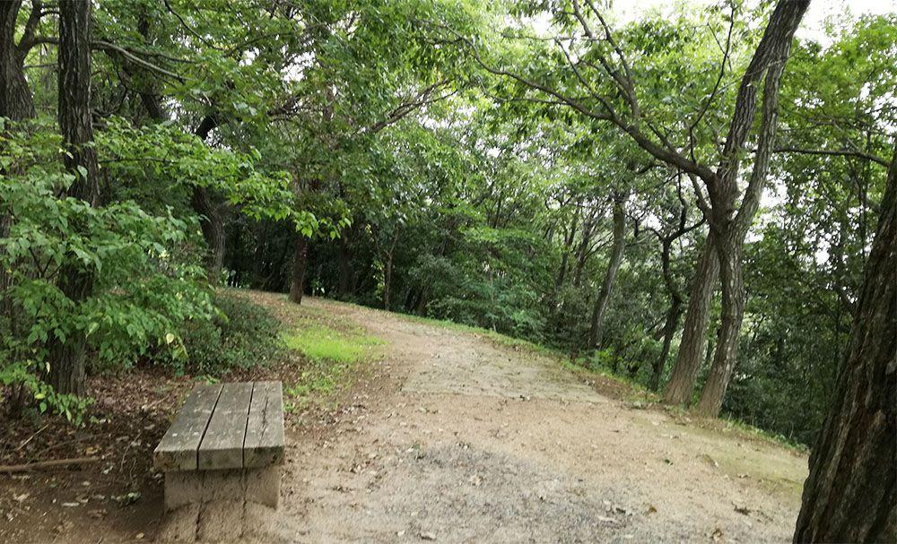 金山城跡の西矢倉台通路